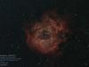 rosette_20200315-8eb51434aea41039c5a5dc7dda221fcd6c44c4d2
